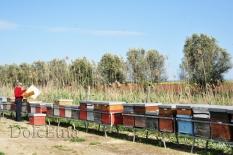 i nostri apiari-3