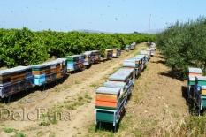 i nostri apiari-4