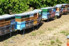 i nostri apiari-5