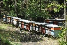 i nostri apiari-9